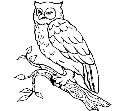 Desenhos de Coruja Para Colorir e Imprimir